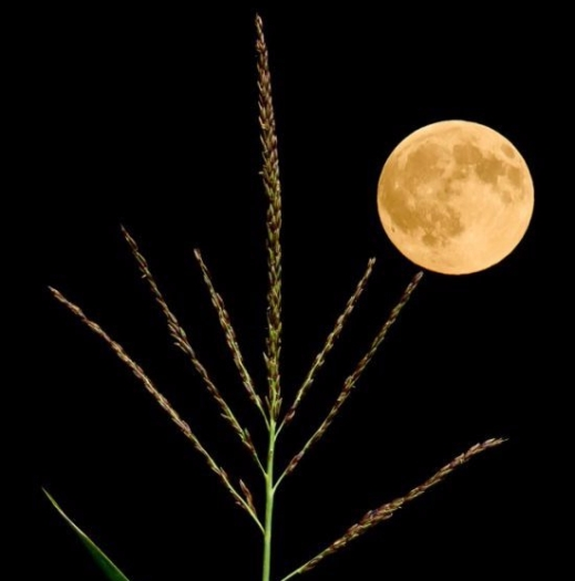 August Green Corn Moon