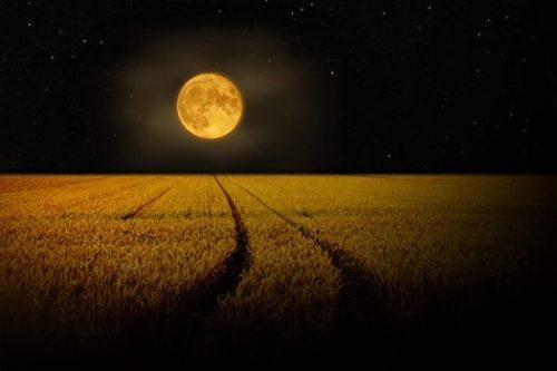 full corn / barley moon